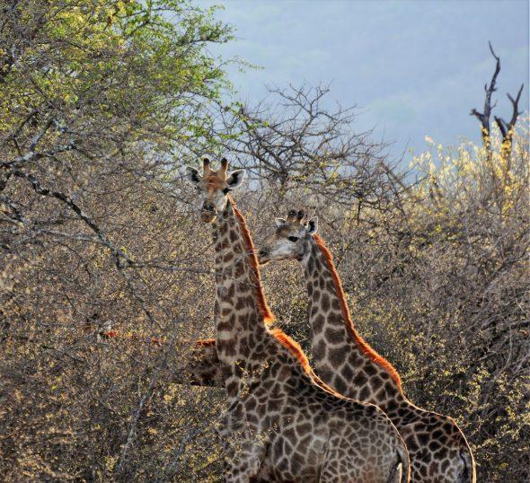 12-11-16-sydafrika-jpg-123